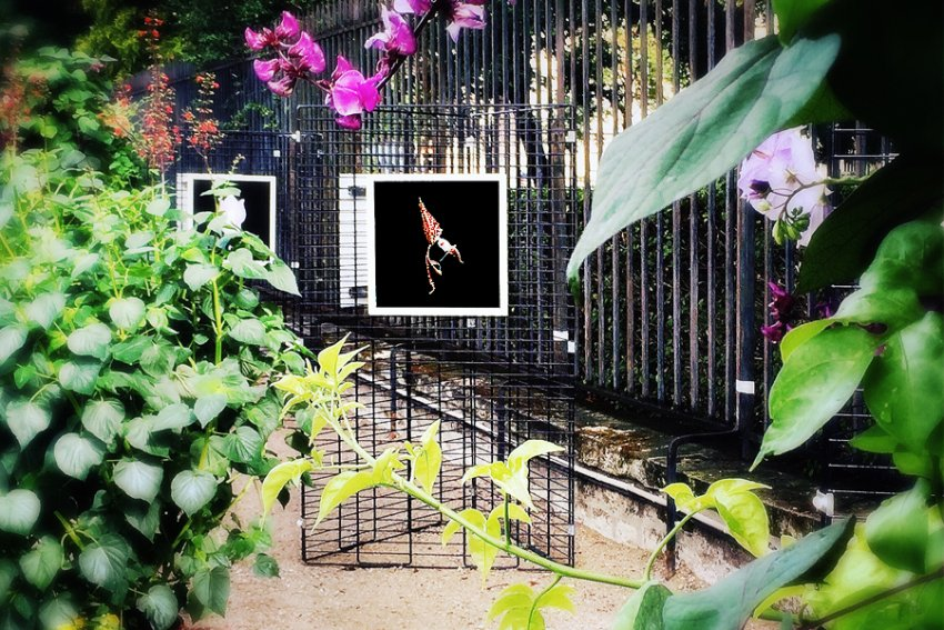 Exposition photo orchid es au jardin du luxembourg for Jardin luxembourg horaires