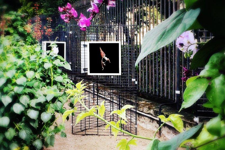 Exposition Photo Orchidees Au Jardin Du Luxembourg Evenements