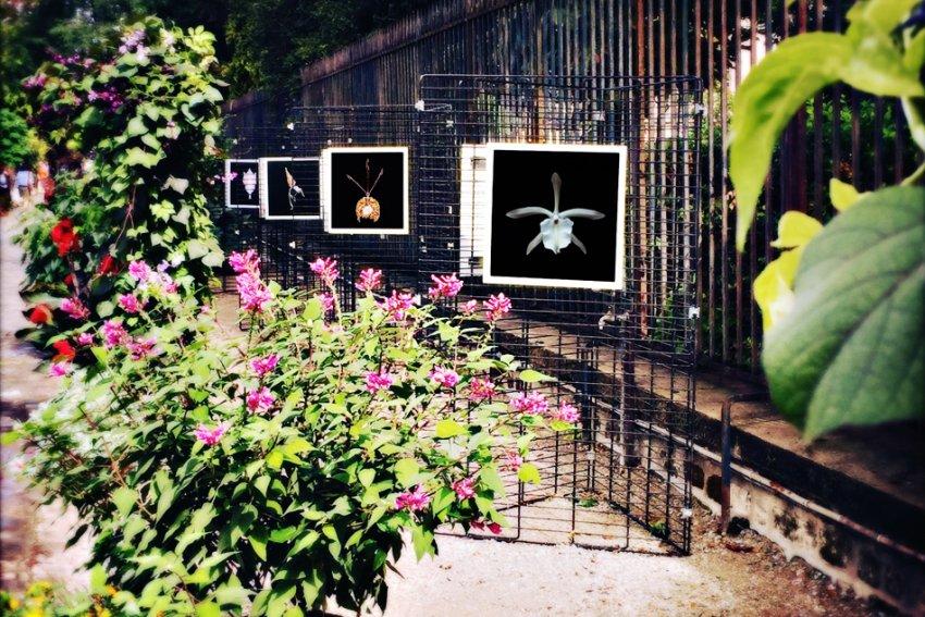 Exposition photo orchid es au jardin du luxembourg ev nements thomas bala photographe - Jardin du luxembourg exposition ...